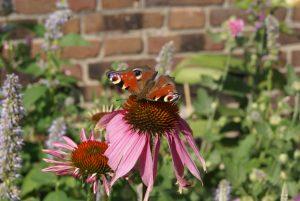 tuinontwerp bloementuin vlindertuin