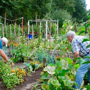 Healing Gardens – tuinieren met kanker